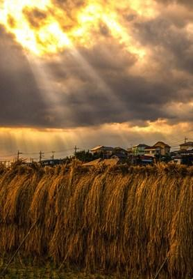 橫濱美術大學獎的照片