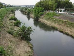 Green leaves inhabitant of a ward marathon photograph (the Tsurumi River banks of a river scenery)