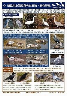 Tarjeta del pájaro salvaje invernal