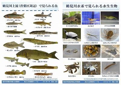 Tarjeta de la observación del pez