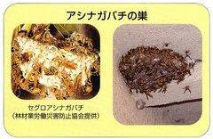 Fotografía del nido de la avispa del papel