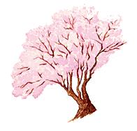 Ilustración del árbol el cerezo salvaje del pupilo