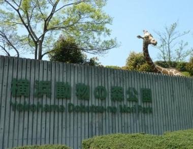 Photograph of forest Park entrance of Yokohama animal