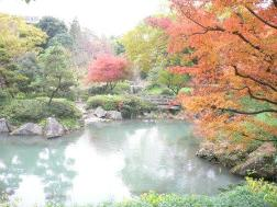 Photograph of colored leaves of Katabira River pro-water city park