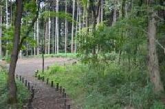 Walk road of Kashiwacho Shimin-no-Mori