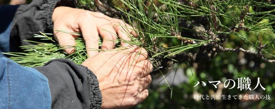 營造庭園工匠維修松樹的手邊的樣子的照片