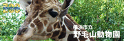 Nogeyama jardins zoológicos