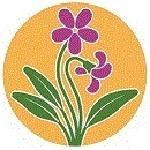 區的花紫羅蘭