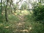 숲 안의 최초의 갈림길의 이미지