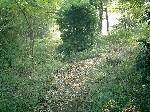 숲 안의 두 번째 갈림길의 이미지