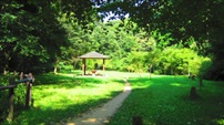 이소고의 숲