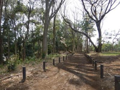 남비 요리집의 숲·원 내의 수림