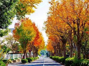 El árbol de la orilla del camino es señales de otoño