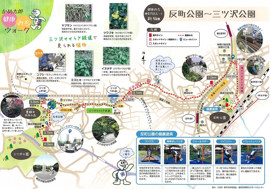 Tortoise Taro health rises and maps route of walk