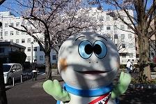 La cereza florece y tortuga Taro