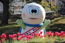 Tortuga Taro que es rodeado por tulipanes rojos