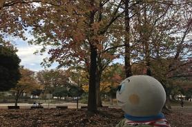 Tortuga Taro que siente otoño