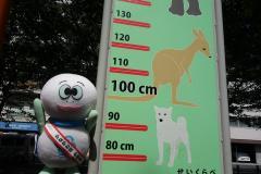 Tortuga Taro que mide la altura
