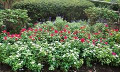 Flor del Toyoko flor ciudad parque