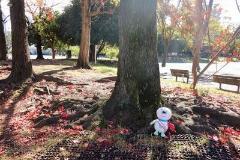 Tortuga Taro que sostuvo las hojas caídas en una mano