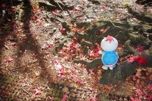 Tortuga que Taro que se caídos las hojas siguen la cabeza