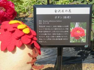 Comentario de la peonía de parque de tortuga suave-descascarada