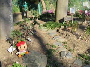 Kamariya Akasaka la cama de flor de Parque