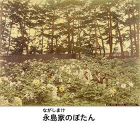 Peonía del Nagashimas