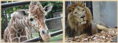 アミメキリンとインドライオンの画像