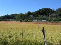 Local photograph for exclusive use of Noba agriculture