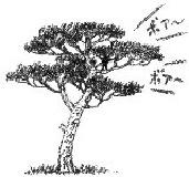 Image of pine