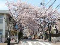 Photograph of Sakuramichi