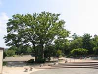 Photograph of Noba Chuo Park