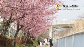 平門永谷河散步