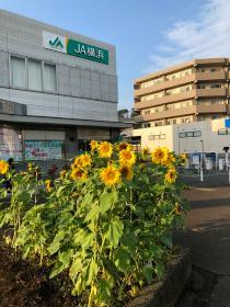 Photograph of Kaminagaya station square 2