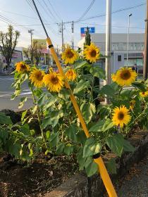 Photograph of Kaminagaya station square 3