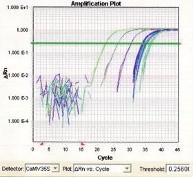 정량 PCR의 증폭 곡선의 화면