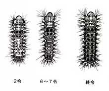 Imagen de la picadura larval