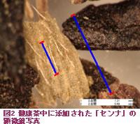 "Micrograph of ""Senna alexandrina"" added in figure 2 health tea"
