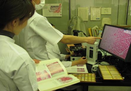 병리 검사의 사진 1