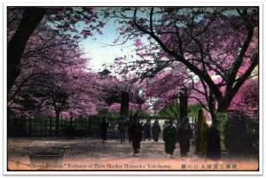 La cereza florece del Yokohama la entrada de Sankei-en Jardín