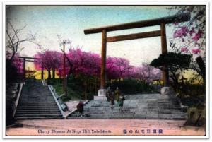 Mt. Noge, Yokohama. las lozanías de la cereza