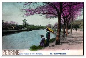 Negishi, canal del Yokohama. las lozanías de la cereza