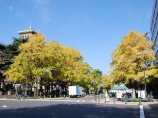 Ginkgo of Nihon Odori Avenue