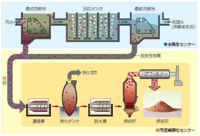 La figura del flujo del material radiactivo incluyó en el alcantarillado
