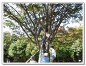 Sube un árbol