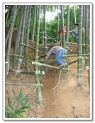 Precipicio de bambú atlético
