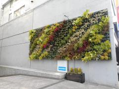 Image of wall surface tree planting