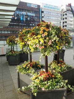 Image of container flower bed with hanging