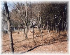 Fotografía del bosque del contacto de Ichizawa